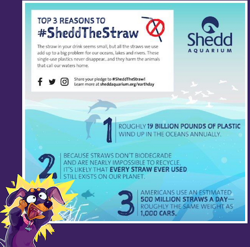 Did You Know? Straws Suck!